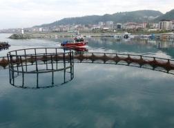 صيادو البحر الأسود يتجهون للاستزراع السمكي
