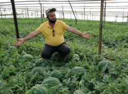 بالصور.. بدء موسم البطيخ في أنطاليا.. بهذا السعر يباع الكيلو غرام