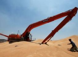 العراق يشتري نحو 3 ملايين طن من القمح المحلي  هذا الموسم