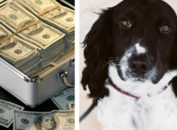كلب جمارك يضبط 23 ألف دولار قبل سفرها إلى إسطنبول
