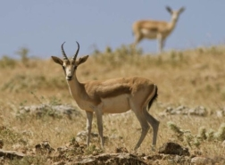 بالصور.. 15 حيوان بري يتواجد في تركيا بعضها مهدد بالانقراض