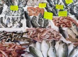 ارتفاع عدد الأسماك مع زيادة غرامات الصيد الجائر في تركيا