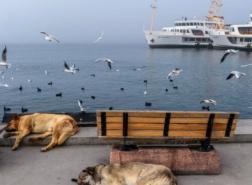 كاتب تركي: الحكومة تستعد للإغلاق الكامل نهاية الشهر