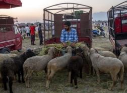 الهند تحظر ذبح الأبقار والجمال في كشمير خلال عيد الأضحى