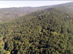 إسطنبول تحظر دخول الغابات طيلة شهر أغسطس