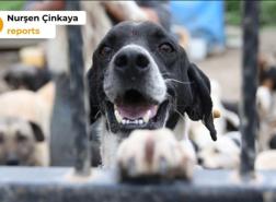 عشرات الحيوانات النافقة قرب مأوى للحيوانات في إسطنبول