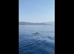 حادثة نادرة.. البيئة التركية ترصد سلحفاة بقوقعة جلدية في المياه التركية