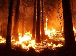 جيش من الطائرات بدون طيار لمحاربة حرائق الغابات في تركيا