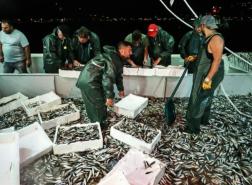 بعد تطهير البحر من المخاط.. هل أسماك مرمرة آمنة للأكل؟