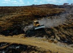 تركيا تبدأ زراعة 100 مليون شتلة لتعويض حرائق الغابات