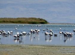 صور.. أكبر بحيرة في تركيا تواجه أزمة وجودية