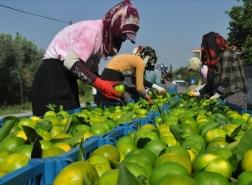 العراق في المرتبة الثانية باستيراد الحمضيات التركية