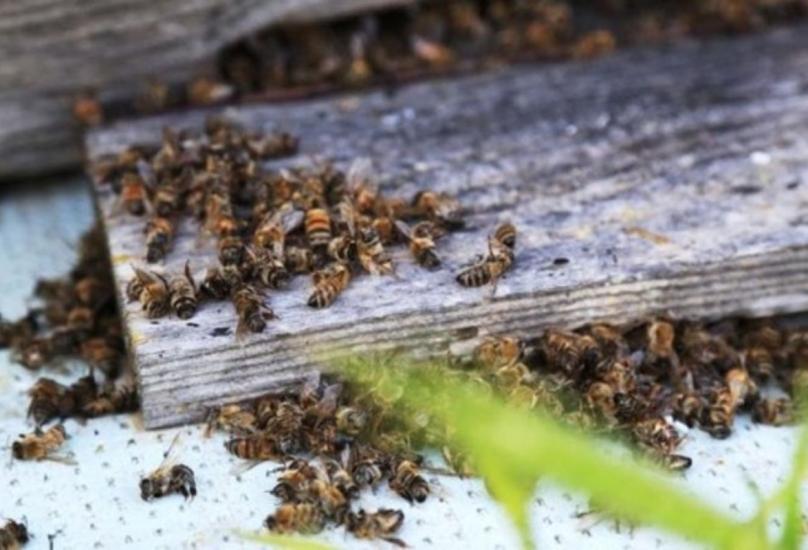الاحتباس الحراري يتسبب بنفوق ملايين النحل في مرسين التركية