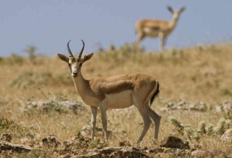 تتنوع الحياة البرية في تركيا بشكل كبير