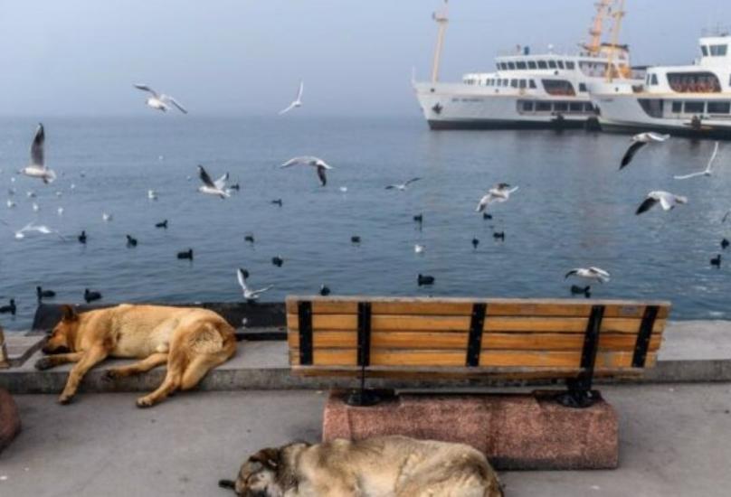 ساحل اسطنبول خلال حظر التجول