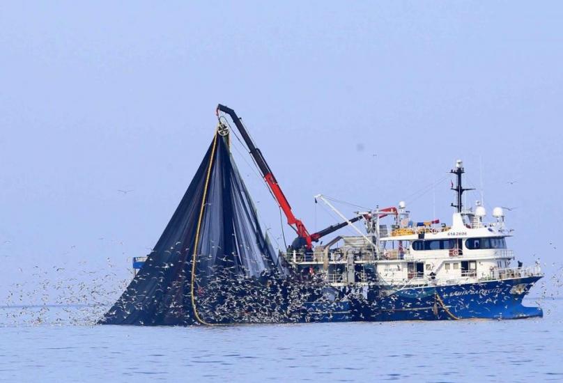 جاءت أسماك القاروص في المرتبة الأولى بـ173 مليون دولار