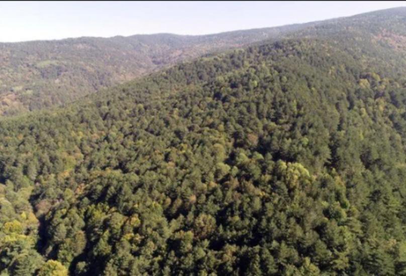 حرائق تلتهم مساحات واسعة من الغابات في تركيا